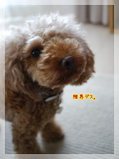 1_20121027210949.jpg