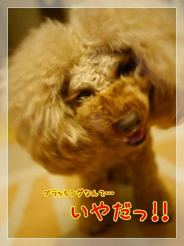 1_20121218224147.jpg