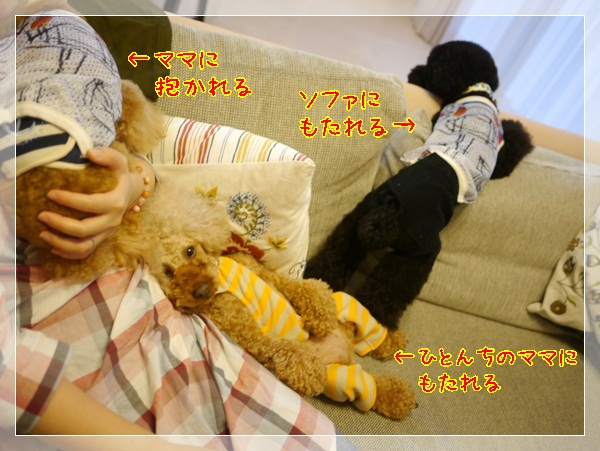 a8_20120617200143.jpg