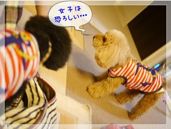 b2_20120603224249.jpg