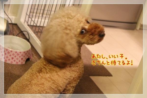 b6_20120618215803.jpg