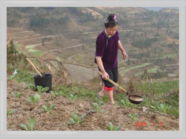 段々畑の農夫