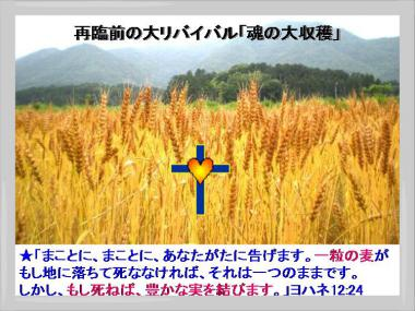 再臨前の大収穫