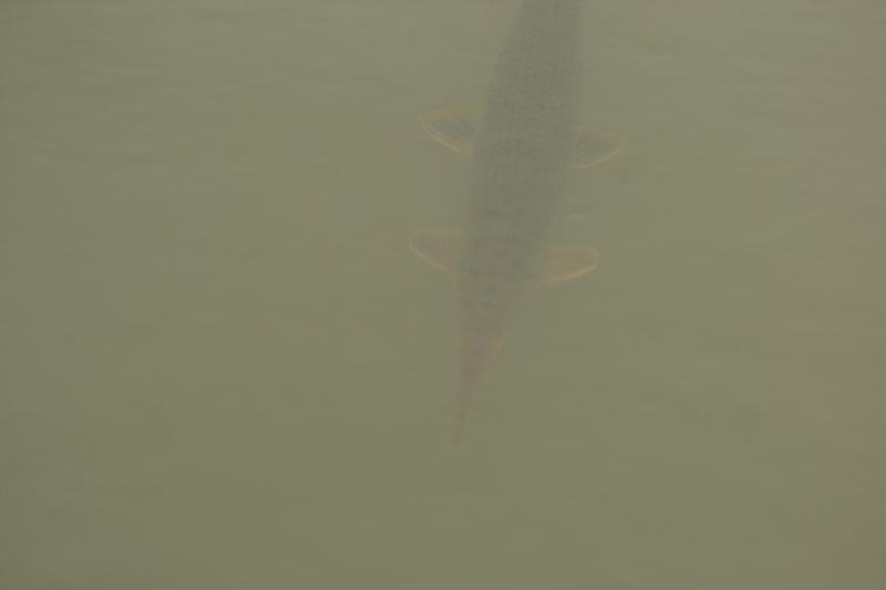 怪魚5120625