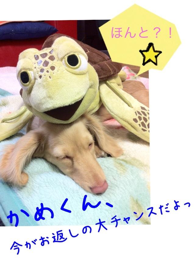 image_20130210040436.jpg