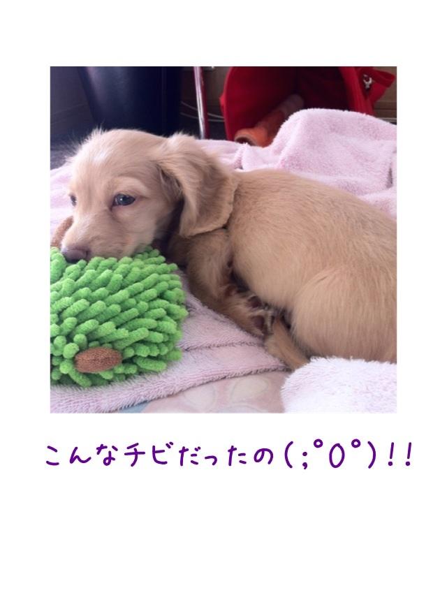 image_20130224195542.jpg