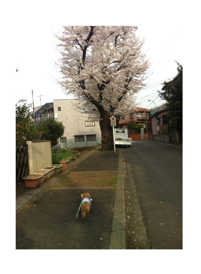 image_20130327033106.jpg