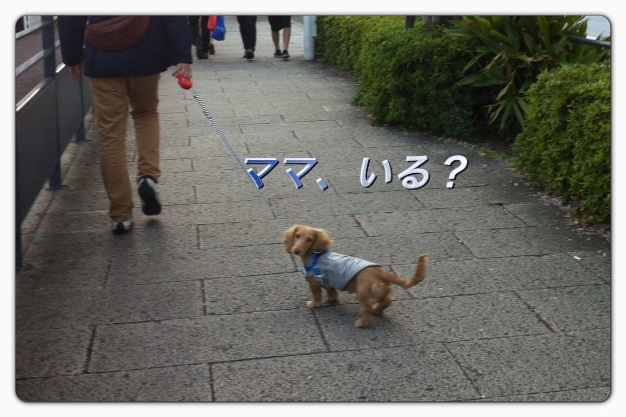image_20130406043204.jpg