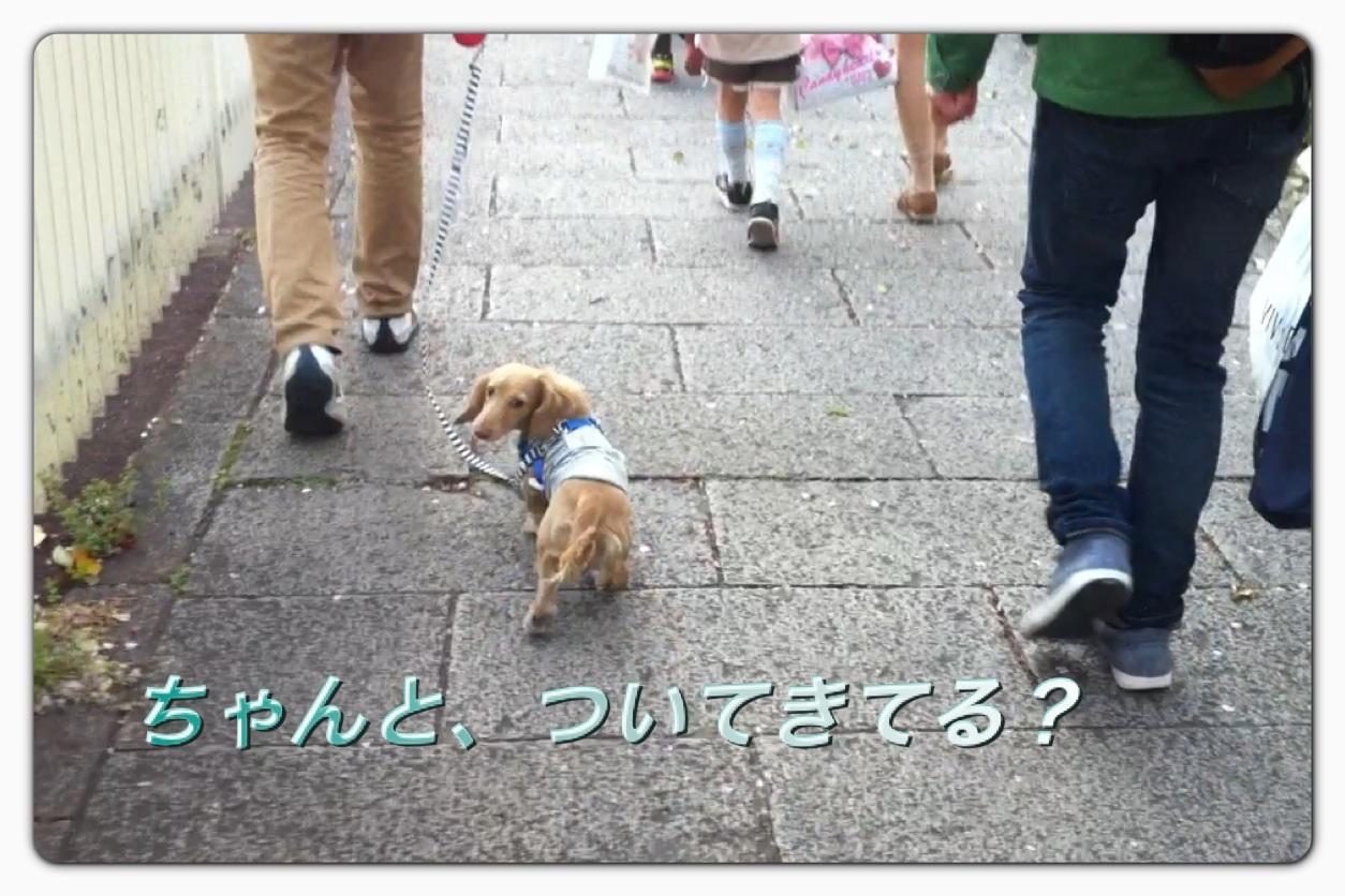 image_20130406043207.jpg
