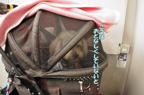 新幹線の旅①