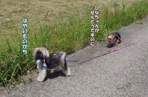 お散歩その2⑨