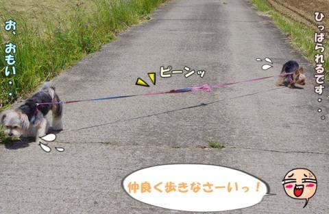 お散歩その2⑮