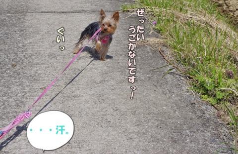お散歩その2⑭
