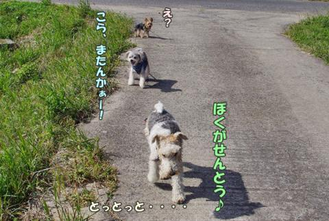 3ワンでお散歩⑤