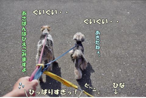 3ワンでお散歩②