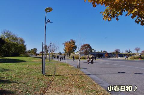 昭和記念公園⑤