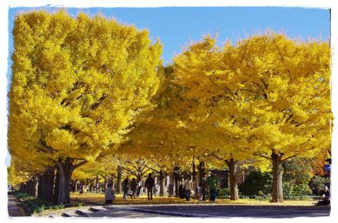 昭和記念公園⑫