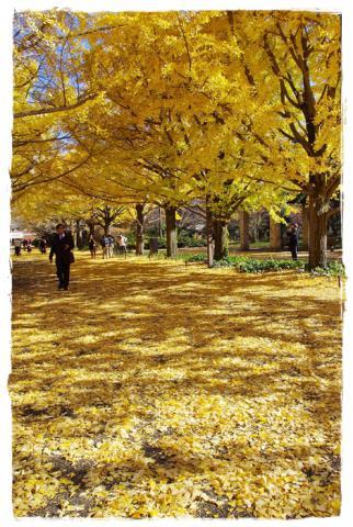 昭和記念公園⑩