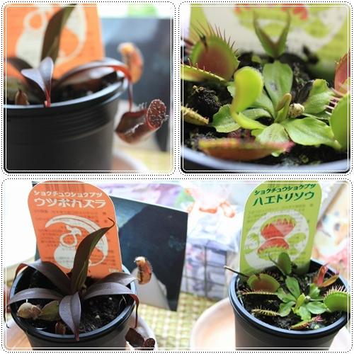 食虫植物☆