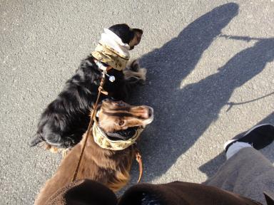平日のお散歩