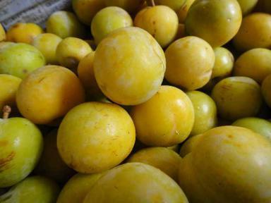 黄色いスモモ