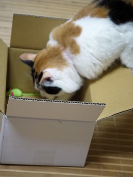 ねずみin楽天BOX
