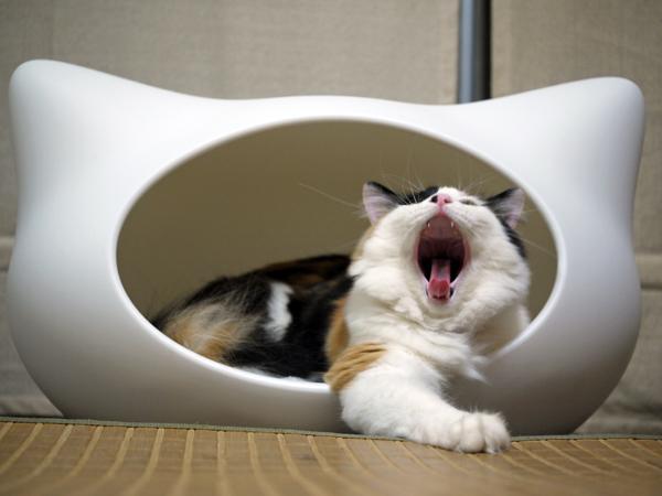 がおーーっin猫ハウス