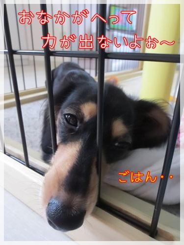 IMG_9311_R.jpg
