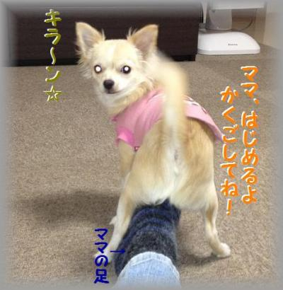 20121129-01_convert_20121129155826.jpg