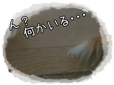 20130319-2 - コピー