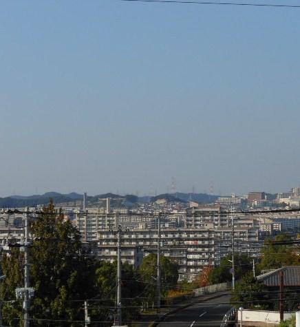 神戸町並み コスモス 030