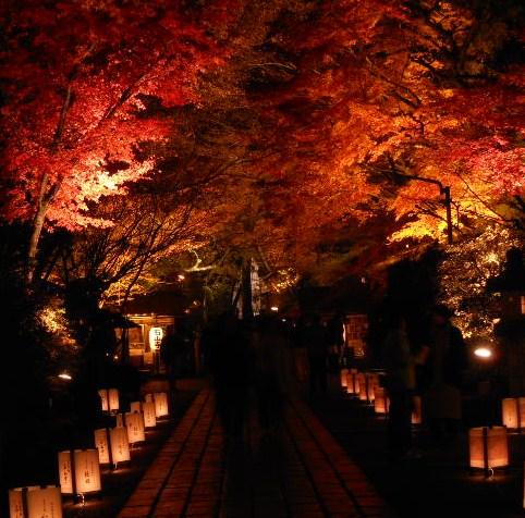 京都 滋賀石山寺、紅葉 015