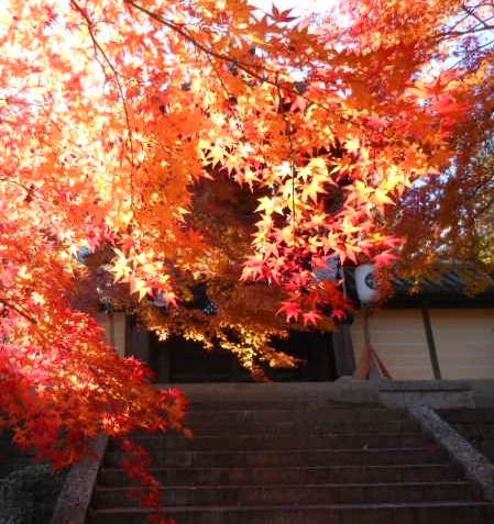 京都 光明寺の紅葉 030