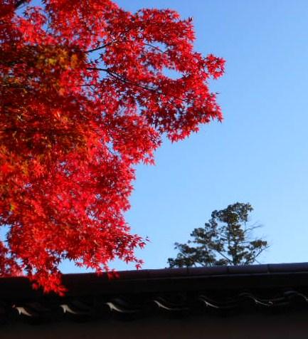 京都 光明寺の紅葉 039