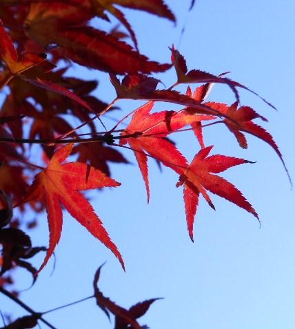 京都 光明寺の紅葉 071