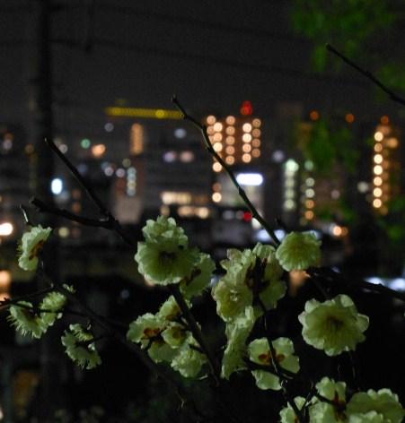 岡本梅林公園 夜景 024