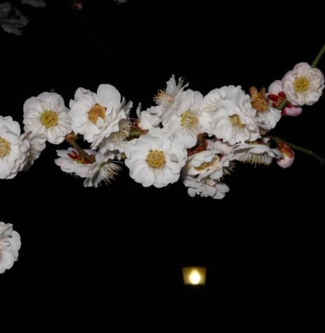 岡本梅林公園 夜景 019