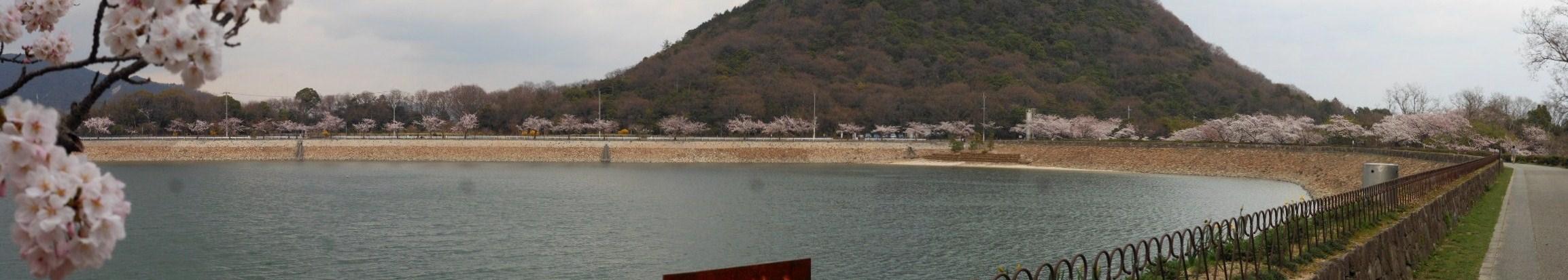 桜 北山ダムパノラマ 1