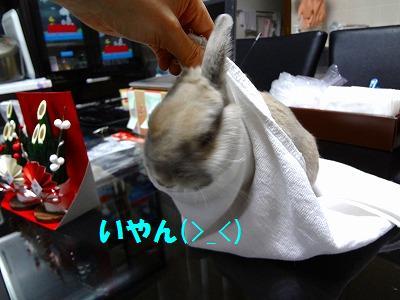 16_20130102010131.jpg