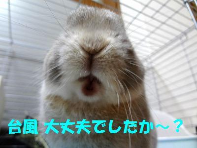 1_20121001030243.jpg