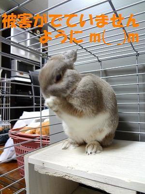 2_20121001030243.jpg