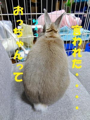 3_20121008024421.jpg
