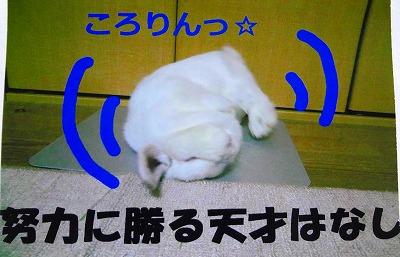 4_20120917044249.jpg