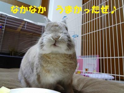 4_20121222032453.jpg