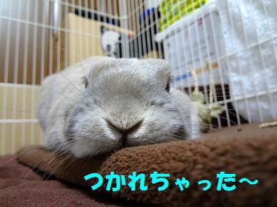 4_20121229032218.jpg