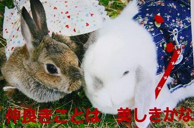 7_20120917044327.jpg