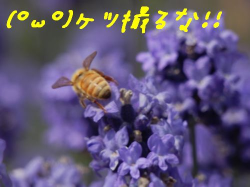 P7290010.jpg