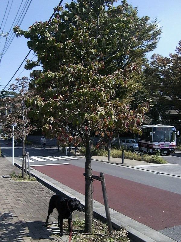091013hanamizuki
