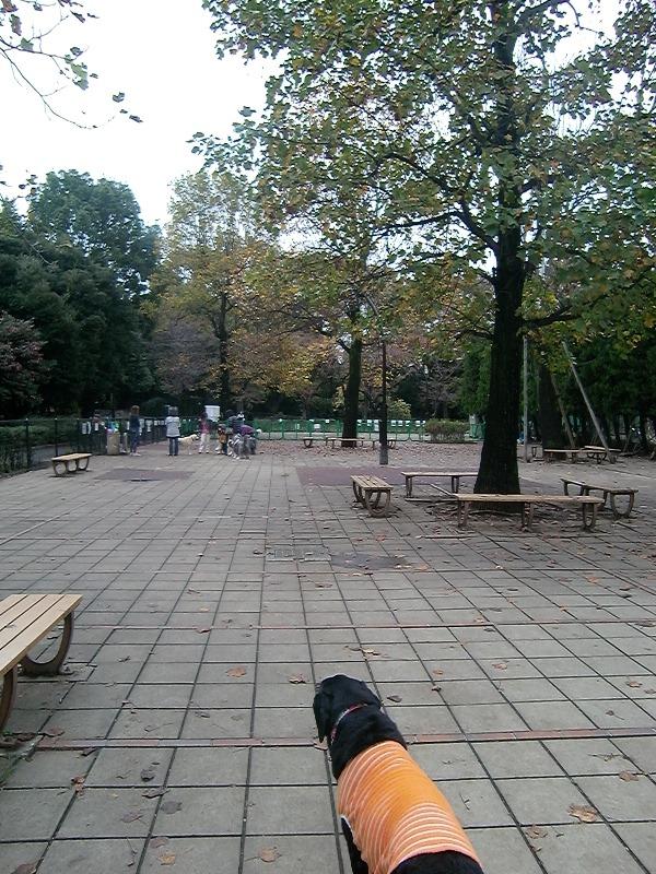 091112komazawa2