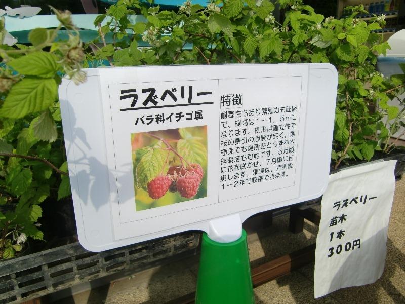 100514raspberry